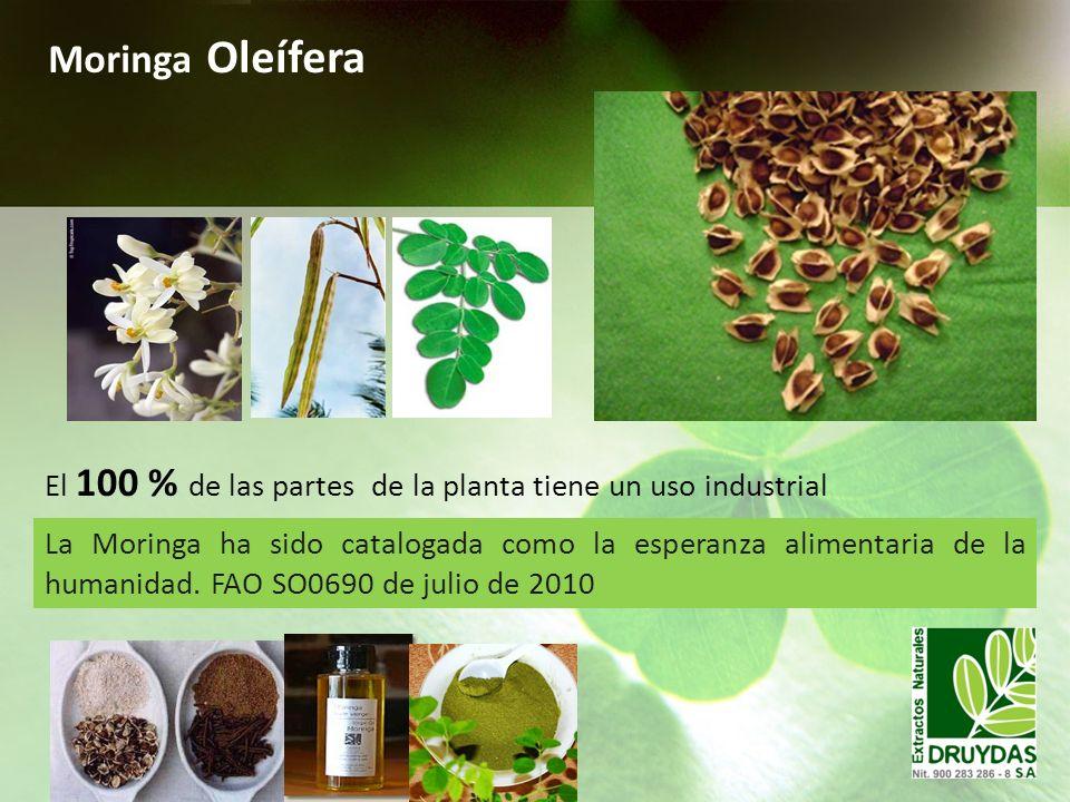 Moringa Oleífera La Moringa ha sido catalogada como la esperanza alimentaria de la humanidad. FAO SO0690 de julio de 2010 El 100 % de las partes de la