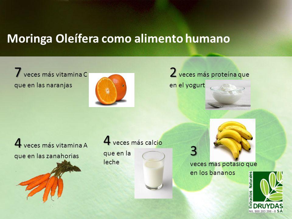 Moringa Oleífera como alimento humano 7 7 veces más vitamina C que en las naranjas 4 4 veces más vitamina A que en las zanahorias 4 4 veces más calcio