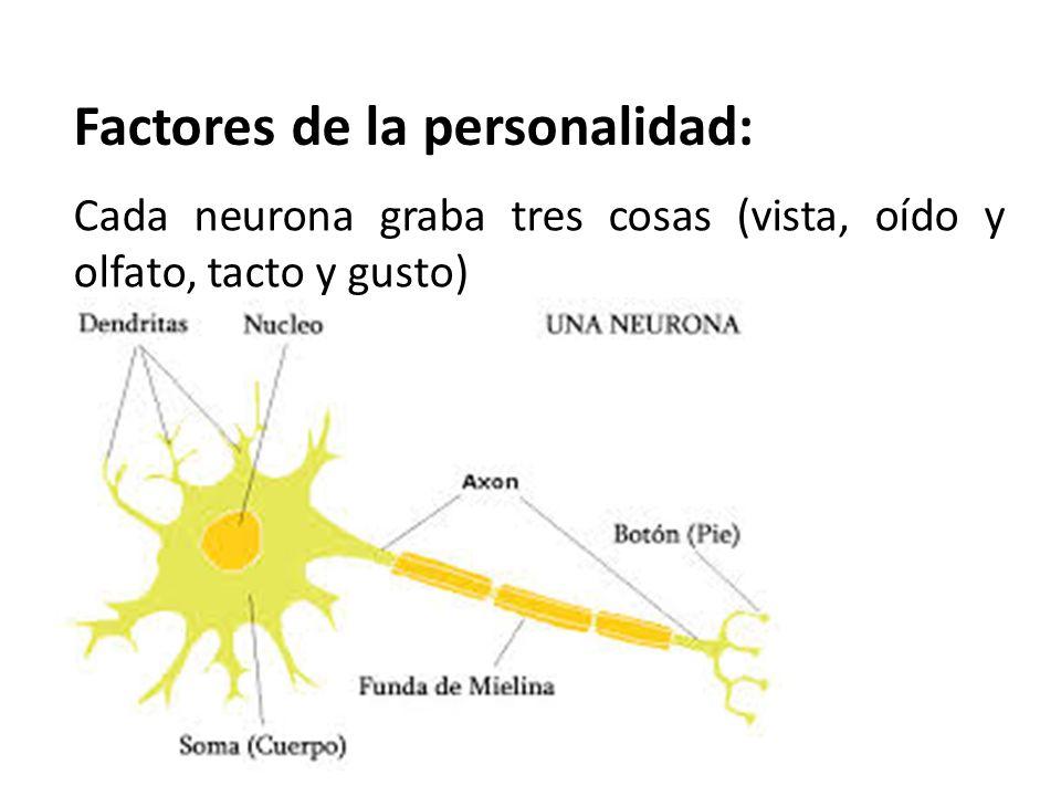 Factores de la personalidad: Cada neurona graba tres cosas (vista, oído y olfato, tacto y gusto)