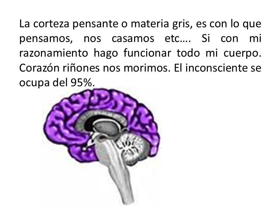 La corteza pensante o materia gris, es con lo que pensamos, nos casamos etc….