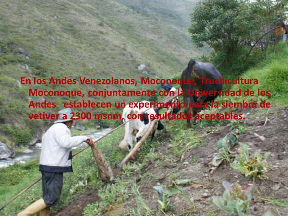 En los Andes Venezolanos, Moconoque, Truchicultura Moconoque, conjuntamente con la Universidad de los Andes establecen un experimento para la siembra