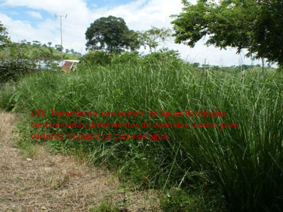 LIFE, Tratamiento con Vetiver de Aguas Residuales contaminadas, provenientes de viviendas rurales, para verterlas limpias a un curso de agua.