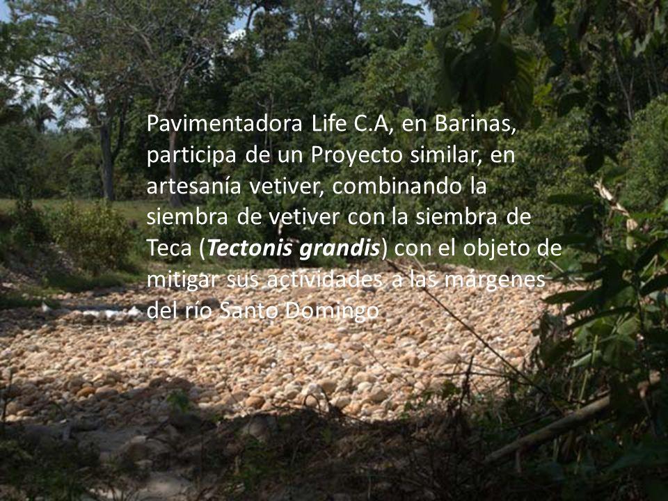 Pavimentadora Life C.A, en Barinas, participa de un Proyecto similar, en artesanía vetiver, combinando la siembra de vetiver con la siembra de Teca (T
