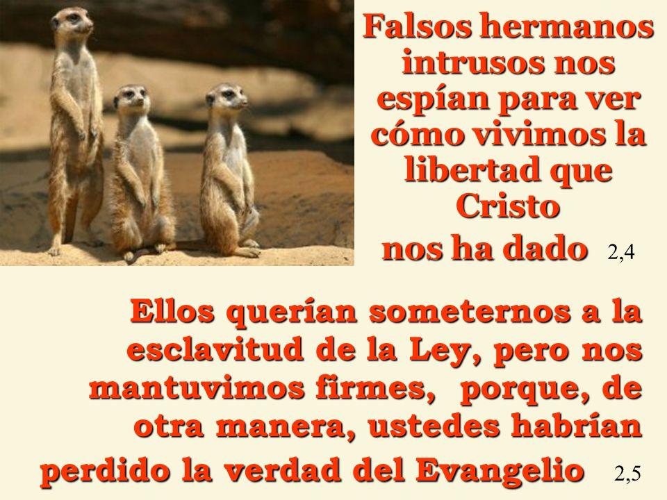 Falsos hermanos intrusos nos espían para ver cómo vivimos la libertad que Cristo nos ha dado dado 2,4 Ellos querían someternos a la esclavitud de la L