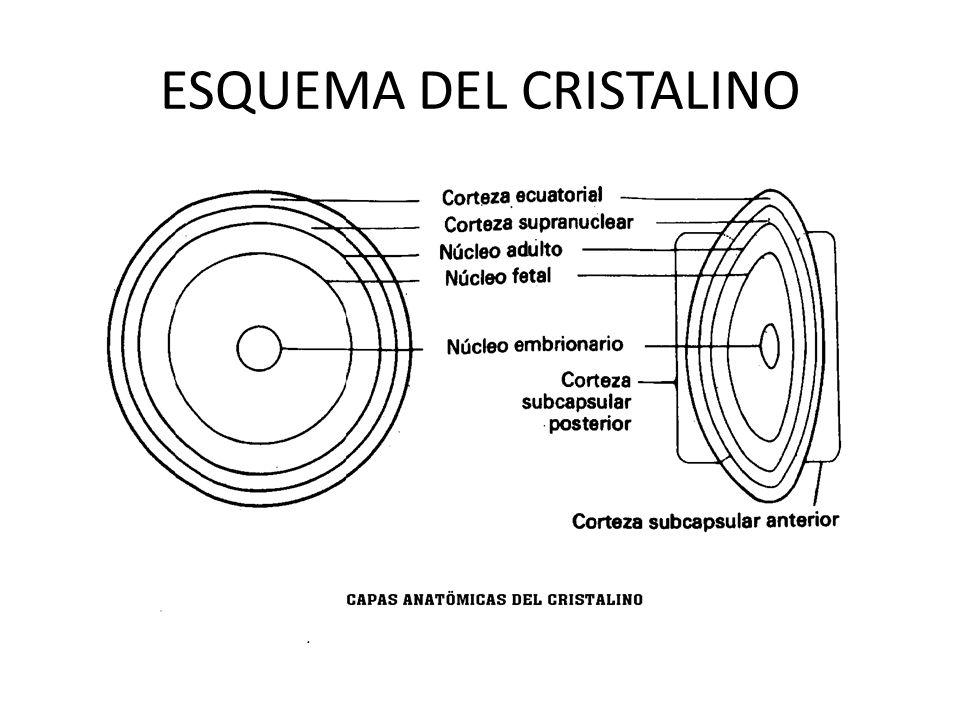 ESQUEMA DEL CRISTALINO