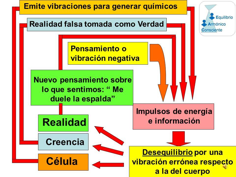 Mente en un estado de paz y tranquilidad El CEREBRO pasa la información y energía de un estado normal Hígado Corazón Piernas SISTEMA INMUNOLOGICO Braz
