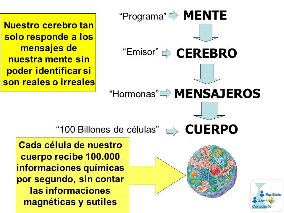 MENTE CEREBRO MENSAJEROS CUERPO Cada célula de nuestro cuerpo recibe 100.000 informaciones químicas por segundo, sin contar las informaciones magnéticas y sutiles Nuestro cerebro tan solo responde a los mensajes de nuestra mente sin poder identificar si son reales o irreales Programa Emisor Hormonas 100 Billones de células