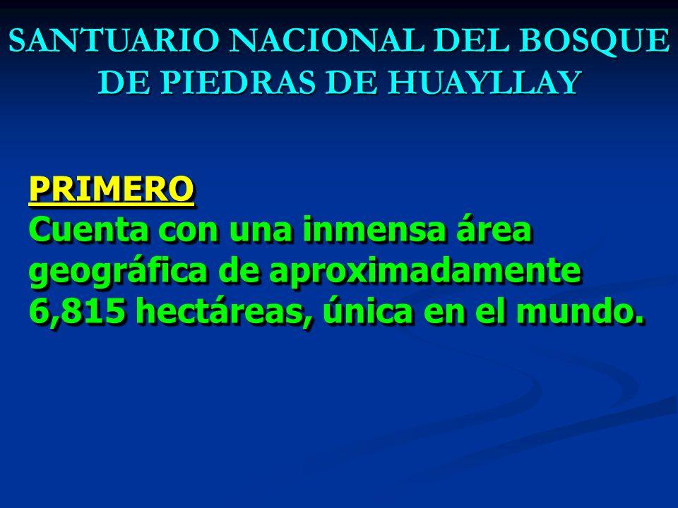 7 razones para elegir al SANTUARIO NACIONAL DEL BOSQUE DE PIEDRAS DE HUAYLLAY LA PRIMERA MARAVILLA NATURAL DEL PERÚ…!!! como