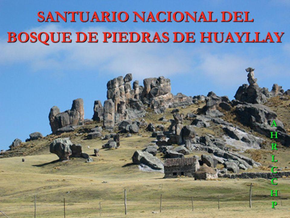 SANTUARIO NACIONAL DEL BOSQUE DE PIEDRAS DE HUAYLLAY PRIMERO Cuenta con una inmensa área geográfica de aproximadamente 6,815 hectáreas, única en el mu