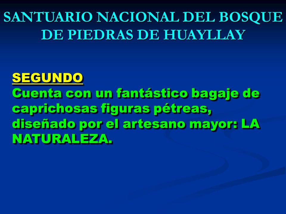 SANTUARIO NACIONAL DEL BOSQUE DE PIEDRAS DE HUAYLLAY AHRLCCHPAHRLCCHPAHRLCCHPAHRLCCHP