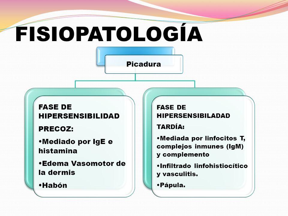 CUADRO CLÍNICO Mosquitos -Pápulas -Prurito -Costras