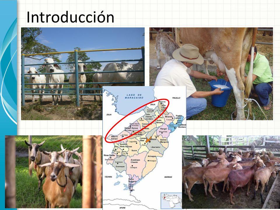 Población de ovinos en América en 2011 Fuente: FAO 2013