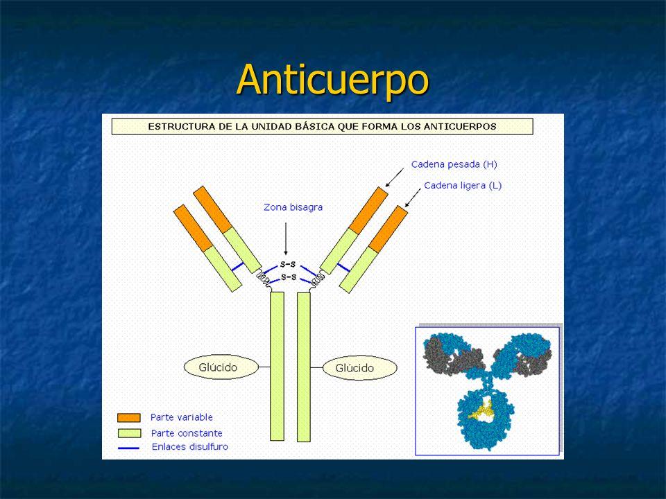 Anticuerpo