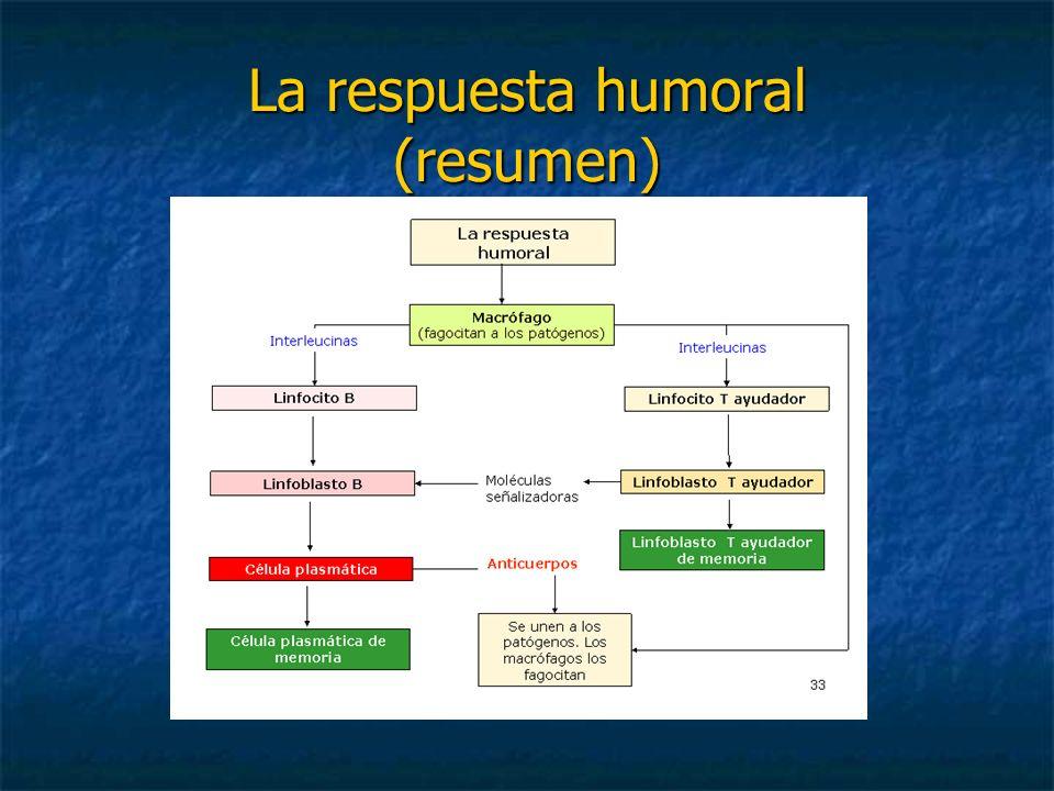 La respuesta humoral (resumen)