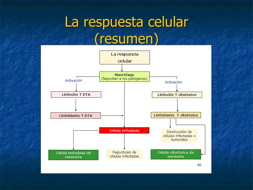 La respuesta celular (resumen)