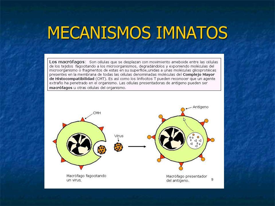 La respuesta inmunitaria Los organismos que desarrollan inmunidad adquirida van a reaccionar desencadenando dos tipos de respuesta Respuesta inmunitaria humoral Respuesta inmunitaria humoral Respuesta inmunitaria celular Respuesta inmunitaria celular
