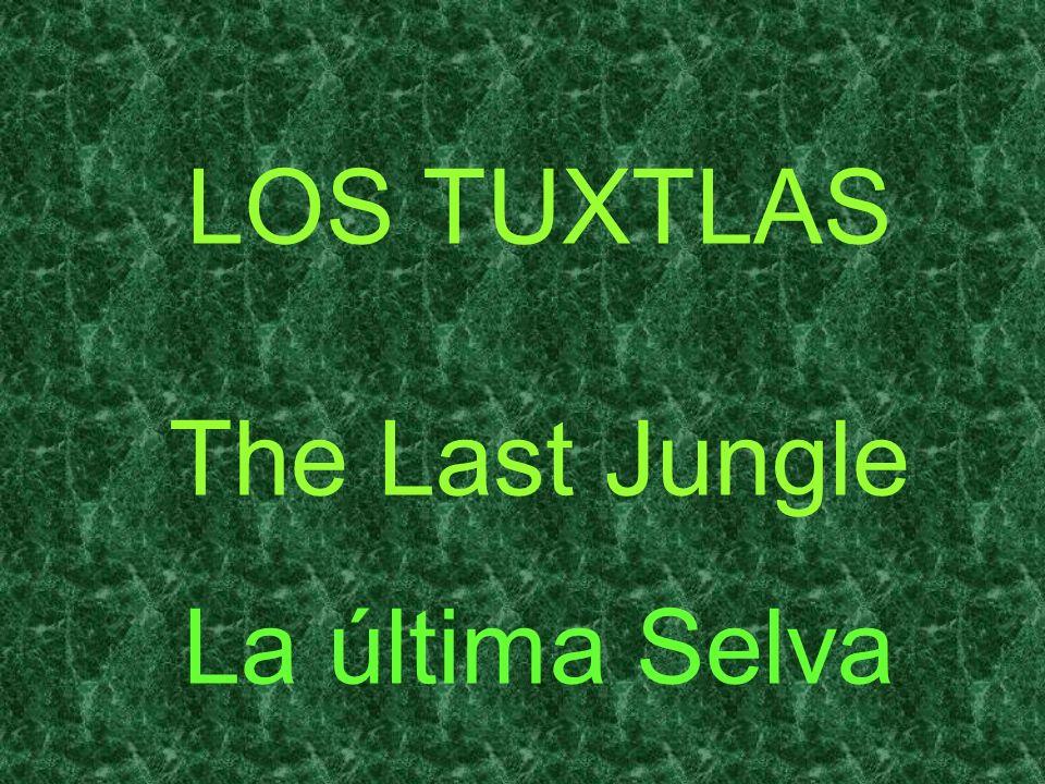 LOS TUXTLAS The Last Jungle La última Selva