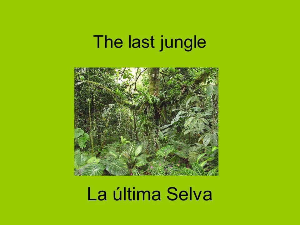 The last jungle La última Selva