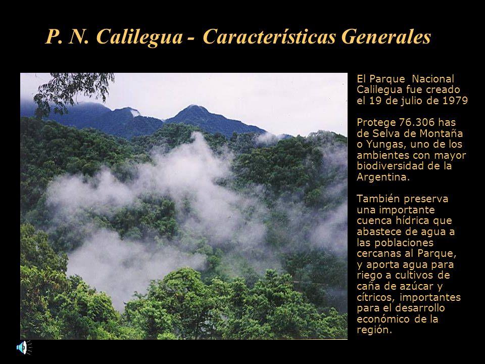 P. N. Calilegua - Características Generales El Parque Nacional Calilegua fue creado el 19 de julio de 1979 Protege 76.306 has de Selva de Montaña o Yu