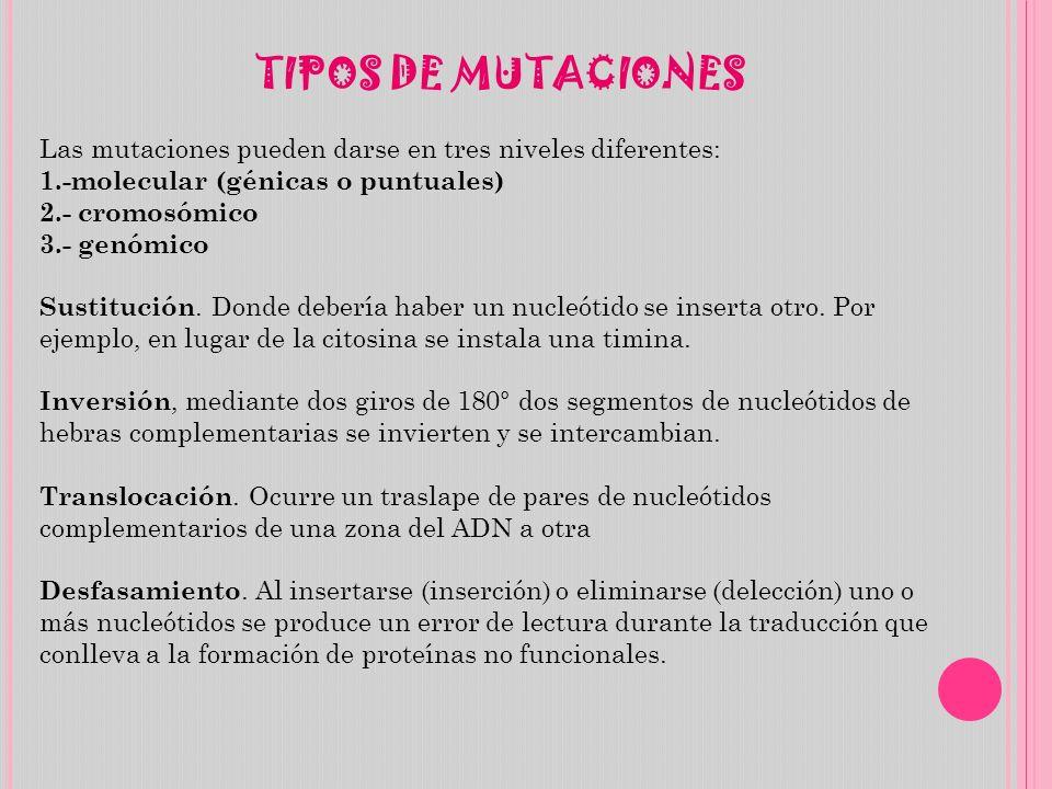 TIPOS DE MUTACIONES Las mutaciones pueden darse en tres niveles diferentes: 1.-molecular (génicas o puntuales) 2.- cromosómico 3.- genómico Sustitució