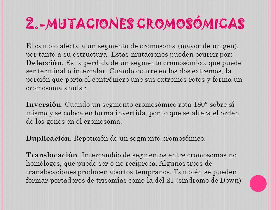 2.- MUTACIONES CROMOSÓMICAS El cambio afecta a un segmento de cromosoma (mayor de un gen), por tanto a su estructura. Estas mutaciones pueden ocurrir