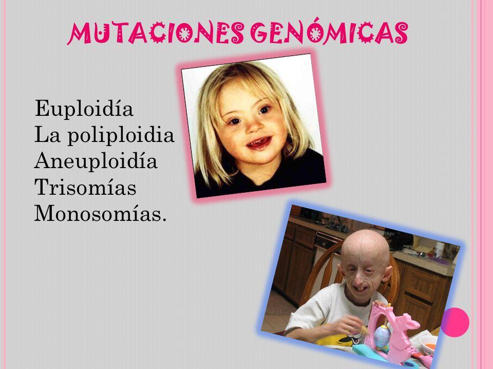 MUTACIONES GENÓMICAS Euploidía La poliploidia Aneuploidía Trisomías Monosomías.