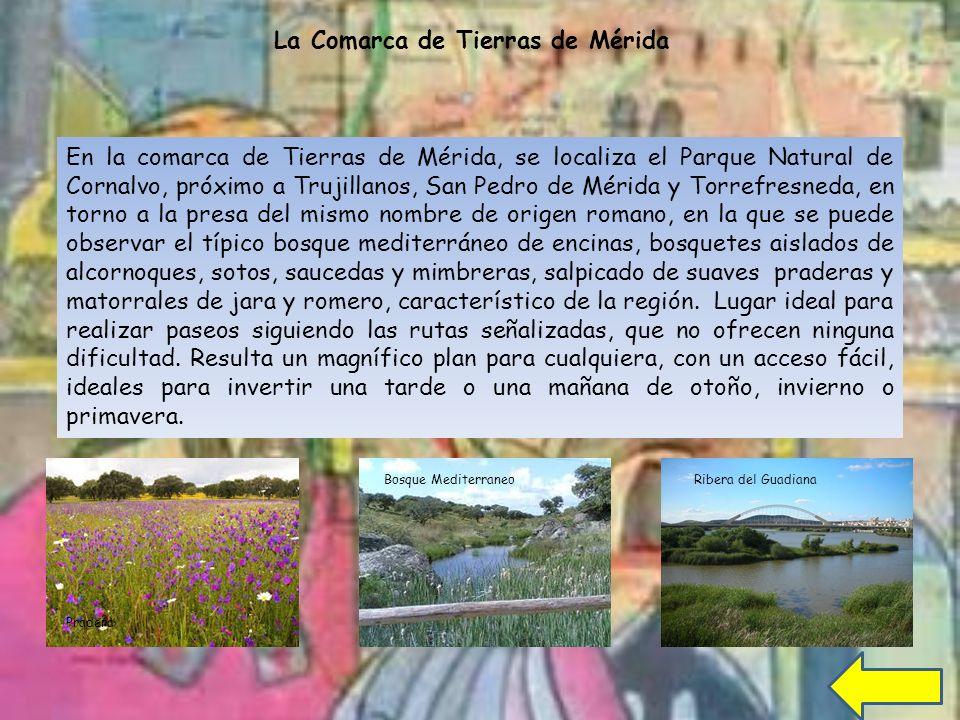 La Comarca de Tierras de Mérida En la comarca de Tierras de Mérida, se localiza el Parque Natural de Cornalvo, próximo a Trujillanos, San Pedro de Mérida y Torrefresneda, en torno a la presa del mismo nombre de origen romano, en la que se puede observar el típico bosque mediterráneo de encinas, bosquetes aislados de alcornoques, sotos, saucedas y mimbreras, salpicado de suaves praderas y matorrales de jara y romero, característico de la región.