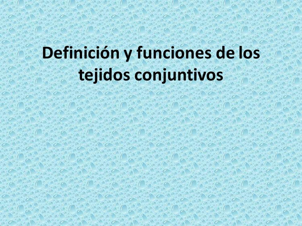 Definición y funciones de los tejidos conjuntivos