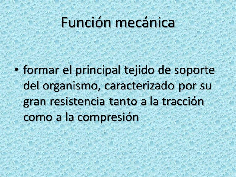 Función mecánica formar el principal tejido de soporte del organismo, caracterizado por su gran resistencia tanto a la tracción como a la compresión f
