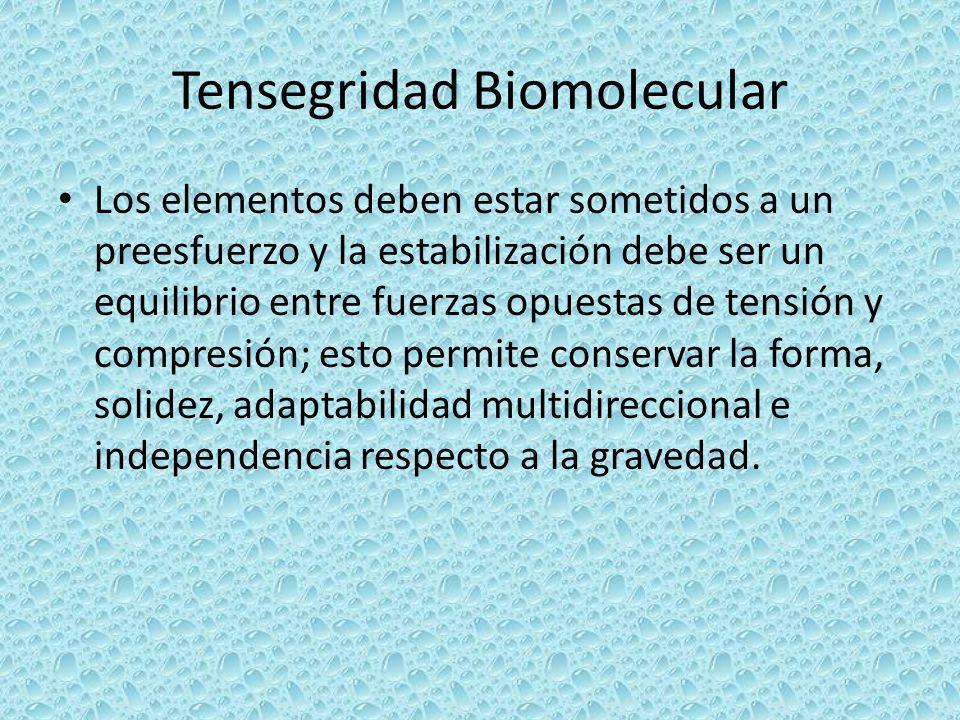 Tensegridad Biomolecular Los elementos deben estar sometidos a un preesfuerzo y la estabilización debe ser un equilibrio entre fuerzas opuestas de ten