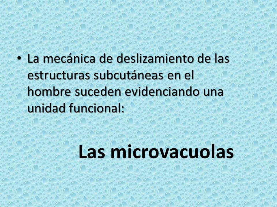 La mecánica de deslizamiento de las estructuras subcutáneas en el hombre suceden evidenciando una unidad funcional: La mecánica de deslizamiento de la