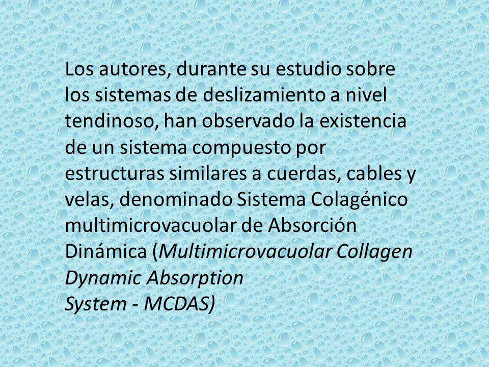 Los autores, durante su estudio sobre los sistemas de deslizamiento a nivel tendinoso, han observado la existencia de un sistema compuesto por estruct