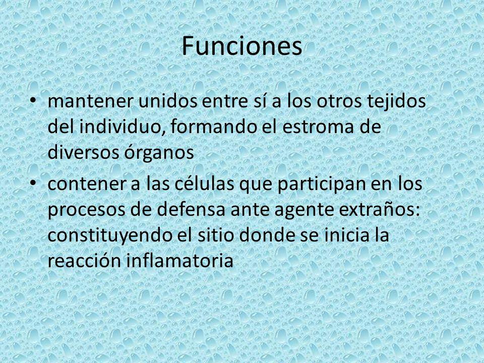 Funciones mantener unidos entre sí a los otros tejidos del individuo, formando el estroma de diversos órganos contener a las células que participan en