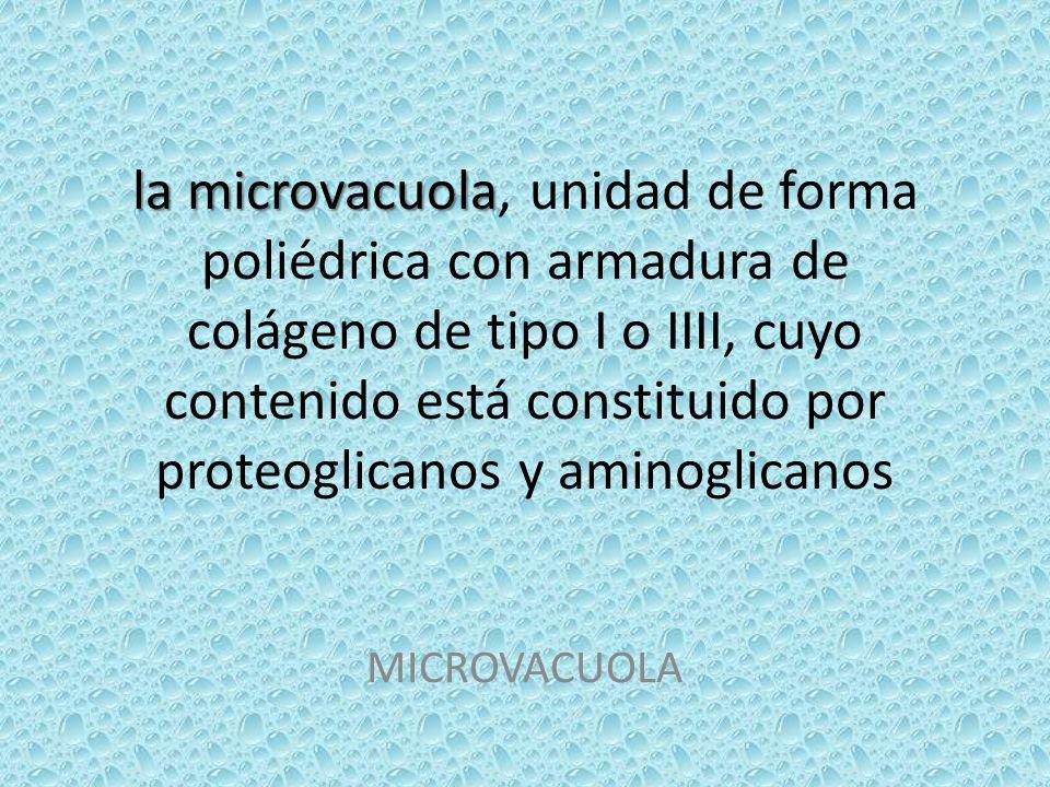 la microvacuola la microvacuola, unidad de forma poliédrica con armadura de colágeno de tipo I o IIII, cuyo contenido está constituido por proteoglica