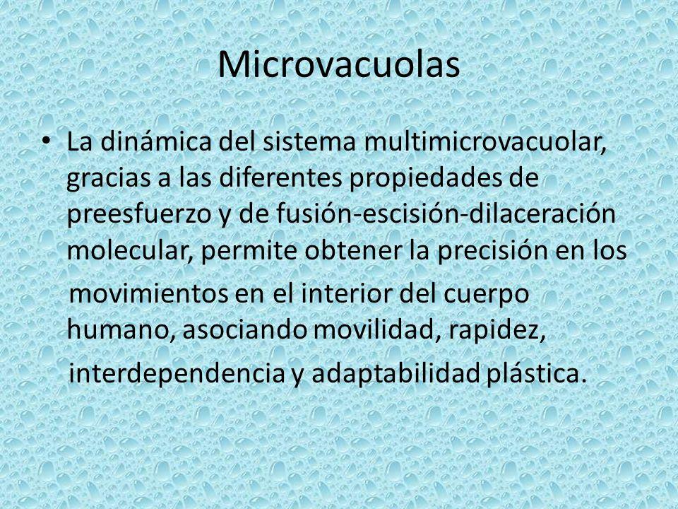 Microvacuolas La dinámica del sistema multimicrovacuolar, gracias a las diferentes propiedades de preesfuerzo y de fusión-escisión-dilaceración molecu