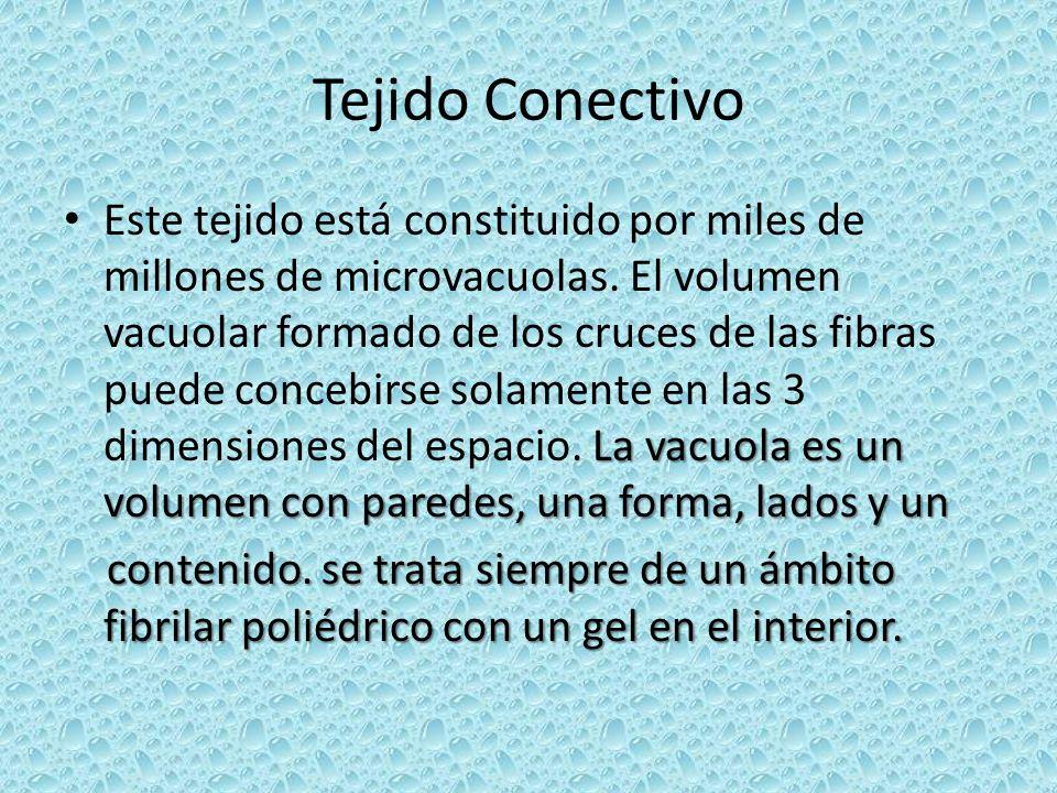 Tejido Conectivo La vacuola es un volumen con paredes, una forma, lados y un Este tejido está constituido por miles de millones de microvacuolas. El v