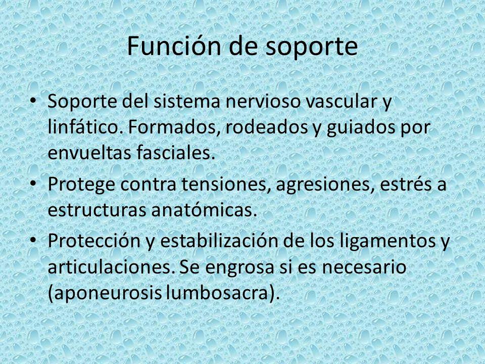 Función de soporte Soporte del sistema nervioso vascular y linfático. Formados, rodeados y guiados por envueltas fasciales. Protege contra tensiones,