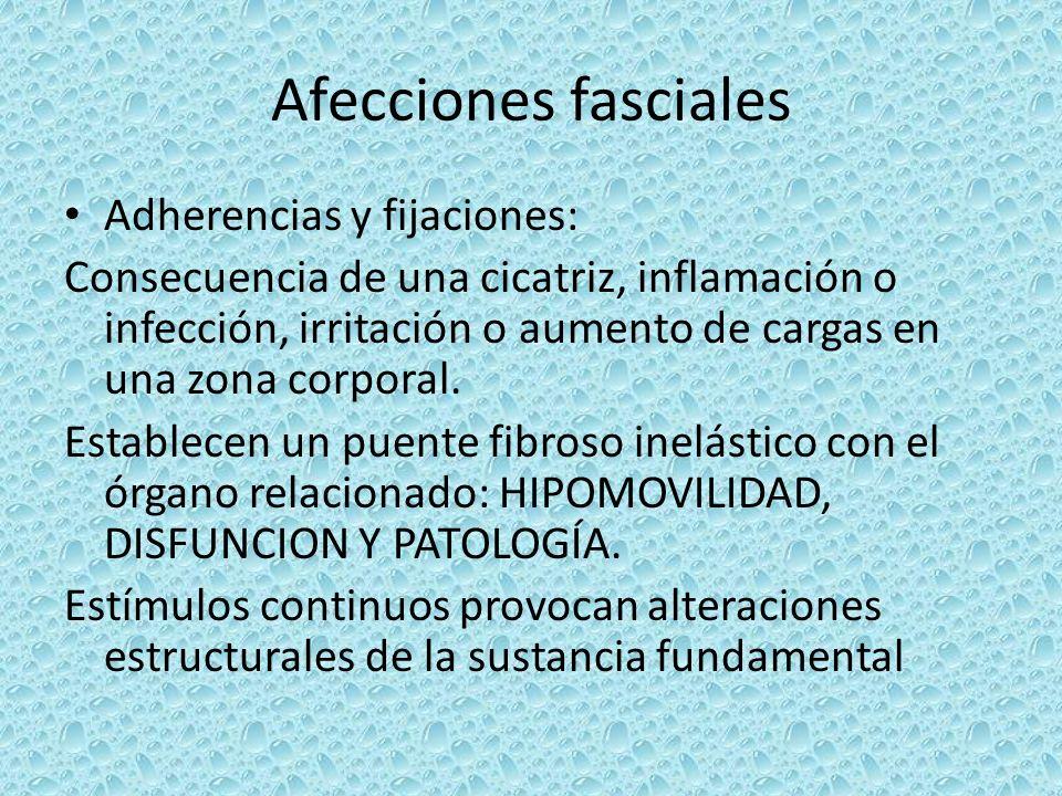 Afecciones fasciales Adherencias y fijaciones: Consecuencia de una cicatriz, inflamación o infección, irritación o aumento de cargas en una zona corpo