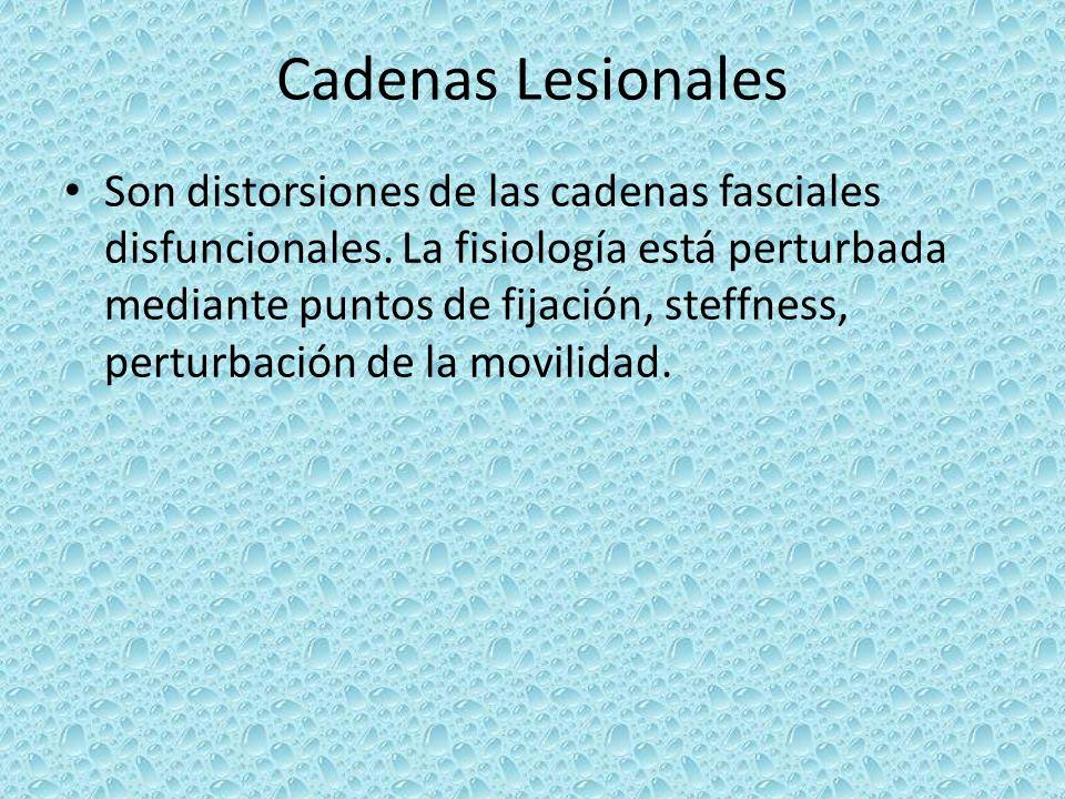 Cadenas Lesionales Son distorsiones de las cadenas fasciales disfuncionales. La fisiología está perturbada mediante puntos de fijación, steffness, per