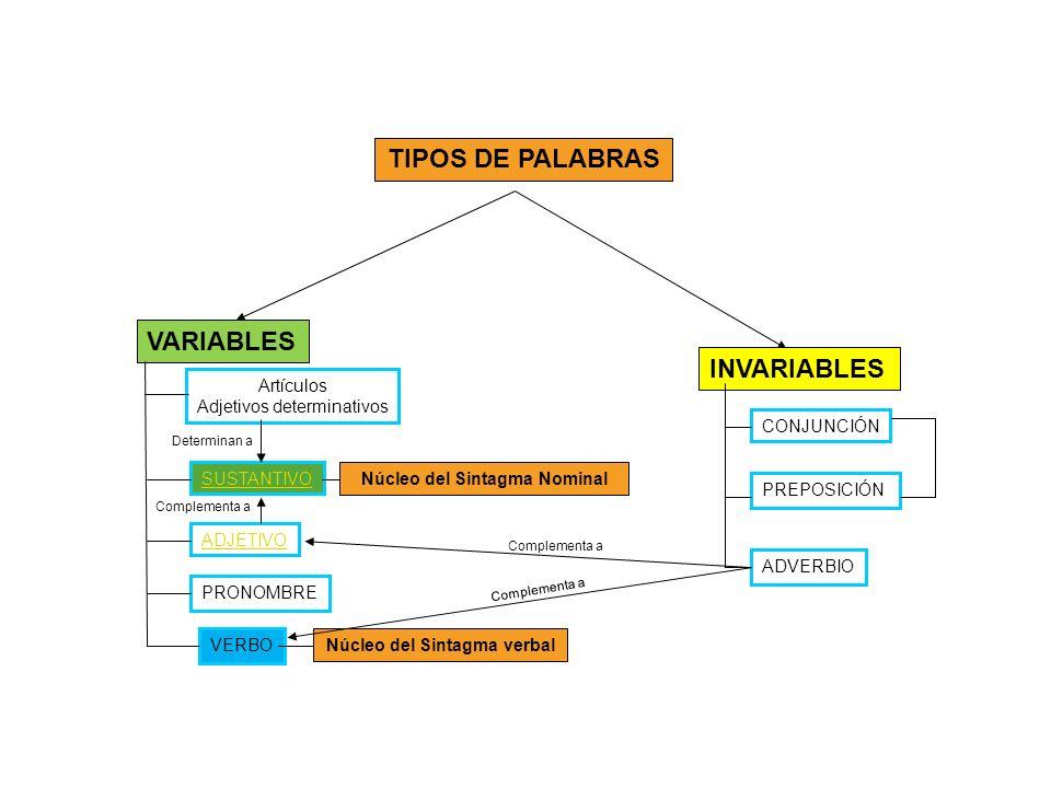 TIPOS DE PALABRAS INVARIABLES VARIABLES Artículos Adjetivos determinativos SUSTANTIVO ADJETIVO VERBO PRONOMBRE CONJUNCIÓN ADVERBIO PREPOSICIÓN Núcleo del Sintagma Nominal Núcleo del Sintagma verbal Complementa a Determinan a