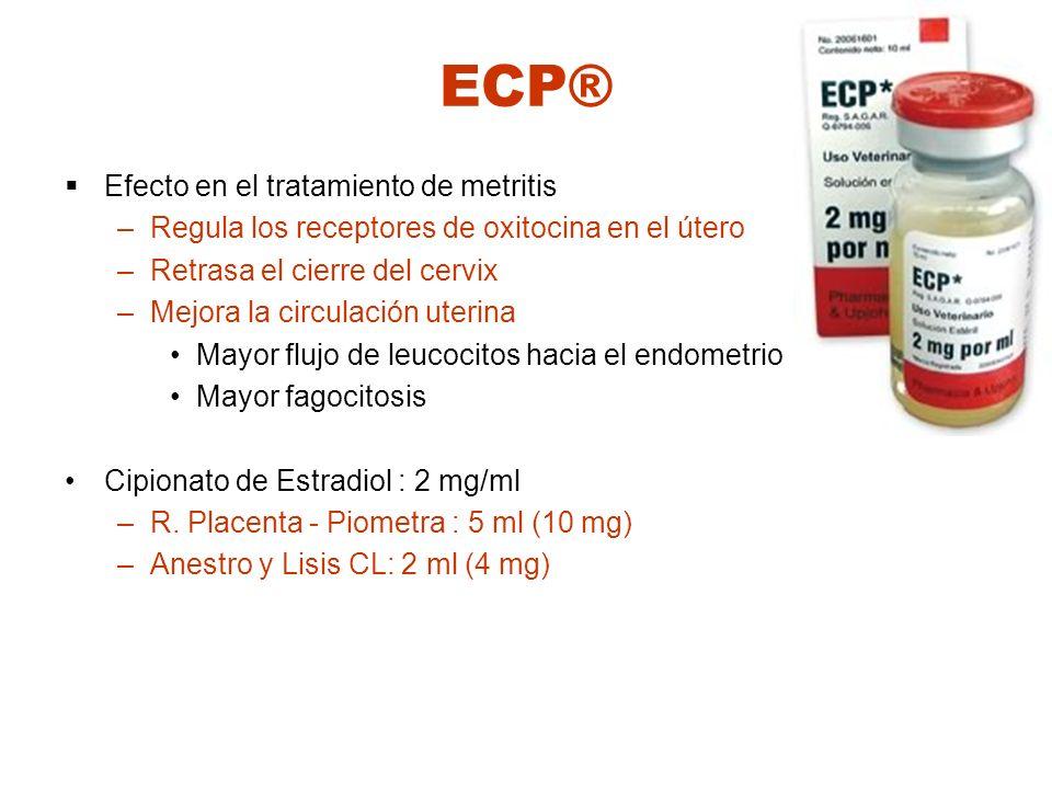 ECP® Efecto en el tratamiento de metritis –Regula los receptores de oxitocina en el útero –Retrasa el cierre del cervix –Mejora la circulación uterina