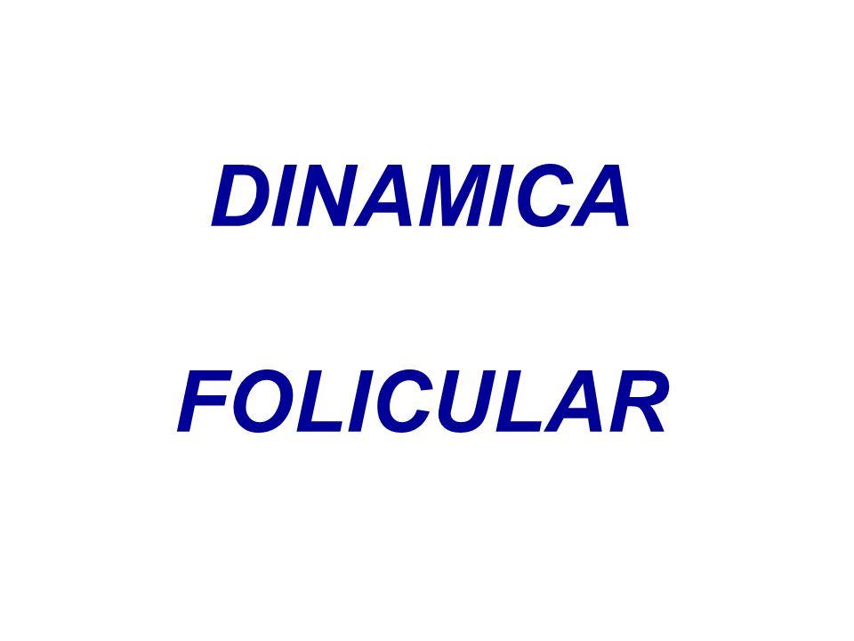 DINAMICA FOLICULAR