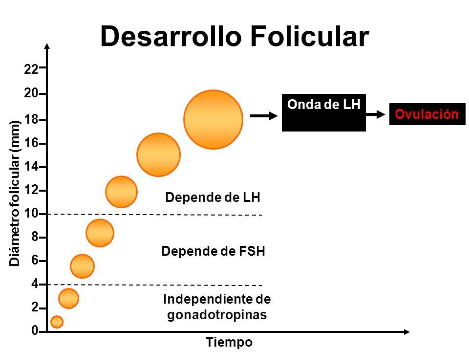Independiente de gonadotropinas Depende de FSH Depende de LH 2 4 6 8 10 12 14 16 18 0 Diámetro folicular (mm) Tiempo 20 22 Desarrollo Folicular Onda d
