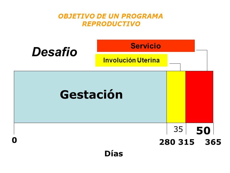Desafio Involução Uterina 35 Período para Reprodução 50 0 280315365 Días Gestación Involución Uterina Servicio OBJETIVO DE UN PROGRAMA REPRODUCTIVO