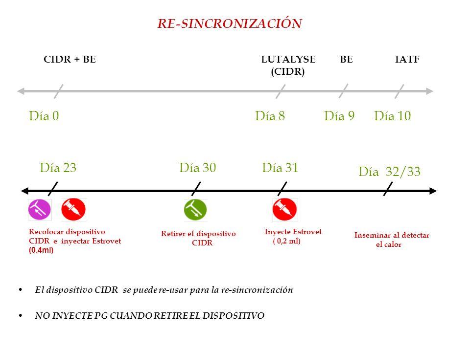 Recolocar dispositivo CIDR e inyectar Estrovet (0,4ml) RE-SINCRONIZACIÓN El dispositivo CIDR se puede re-usar para la re-sincronización Día 0 Día 8 Dí