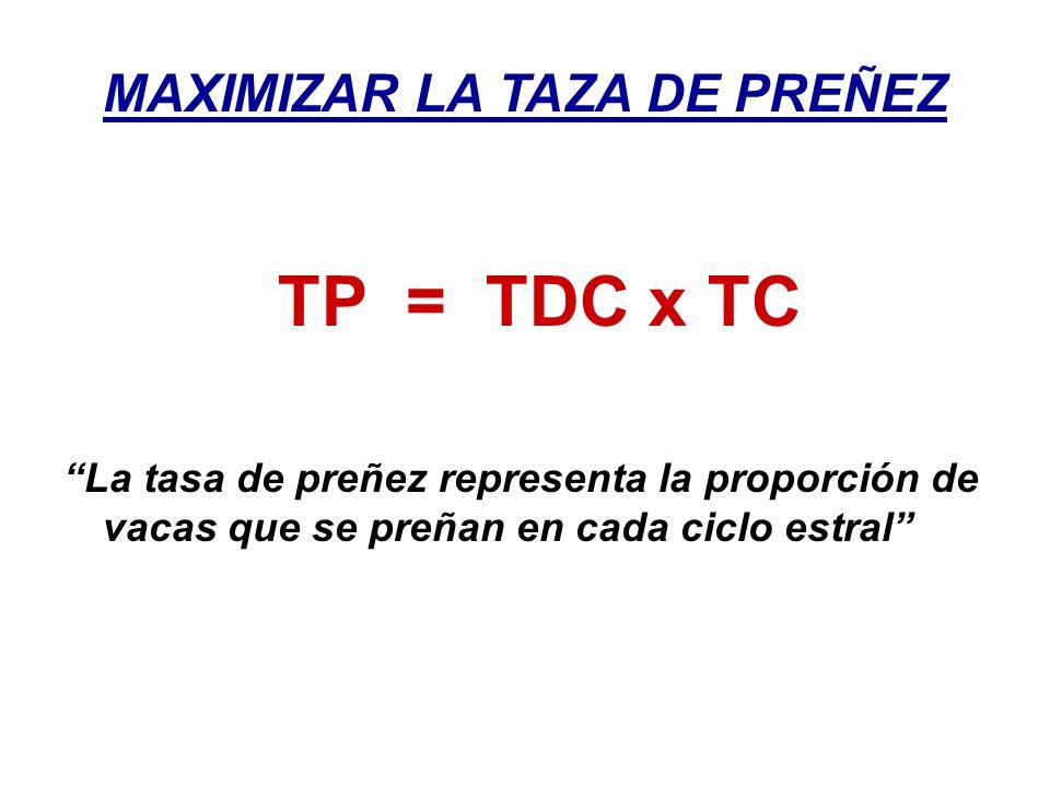MAXIMIZAR LA TAZA DE PREÑEZ TP = TDC x TC La tasa de preñez representa la proporción de vacas que se preñan en cada ciclo estral