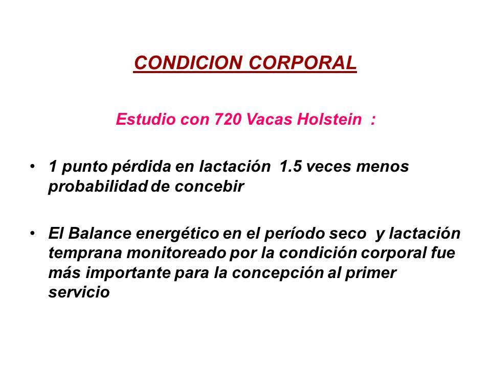 CONDICION CORPORAL Estudio con 720 Vacas Holstein : 1 punto pérdida en lactación 1.5 veces menos probabilidad de concebir El Balance energético en el