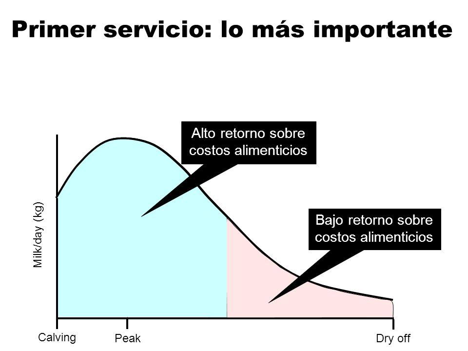 Calving Dry off Milk/day (kg) Peak Alto retorno sobre costos alimenticios Bajo retorno sobre costos alimenticios Primer servicio: lo más importante