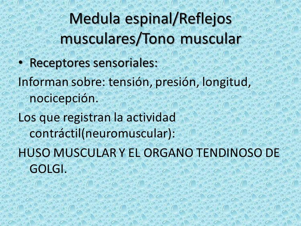 Medula espinal/Reflejos musculares/Tono muscular Receptores sensoriales: Receptores sensoriales: Informan sobre: tensión, presión, longitud, nocicepci