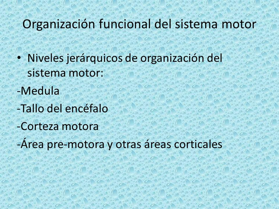 Organización funcional del sistema motor Niveles jerárquicos de organización del sistema motor: -Medula -Tallo del encéfalo -Corteza motora -Área pre-